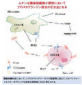 総合生命科学部 生命システム学科 中田 博 教授