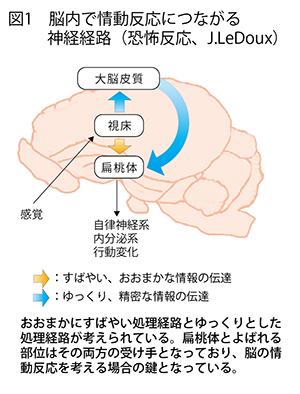 脳を守り、脳を治すストレスが脳に与える—影響を最小限に ...